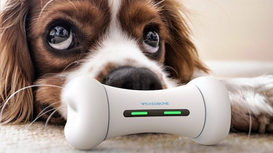 Top 12 Amazing Gadgets 2019 for your Pet Must Have